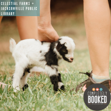 Celestial Farms, Baby Goats, Jacksonville Animal Rescue